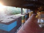 Bijenverhuis Kiewit - Heemtuin-trekschuren (1).jpg