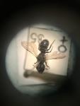 wilde bijen (1).jpg