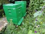 mijn bijen 3.JPG